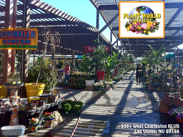 plant-world-nursery shardsofblue
